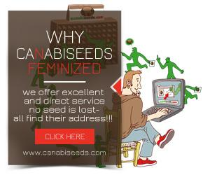 Why CanabiSeeds Fem