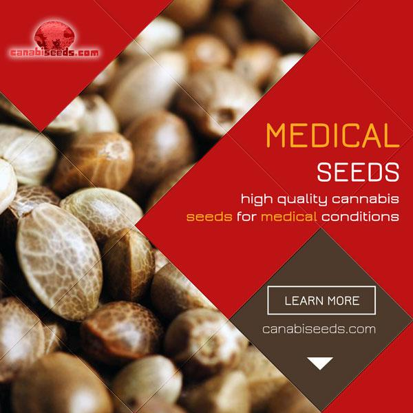 See all our high-quality medical cannabis seeds