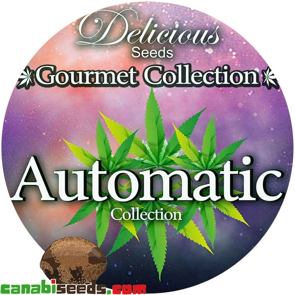 Gourmet Collection - Automatic Strains #1