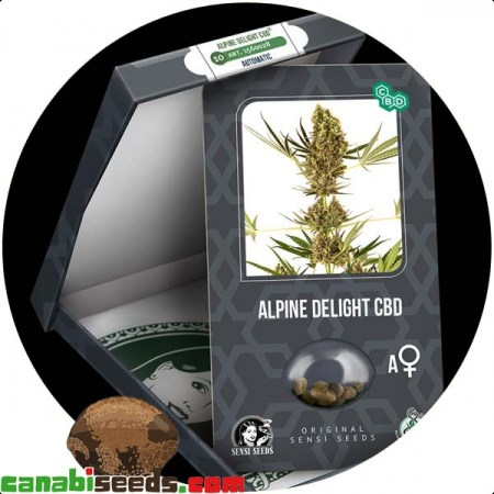 Alpine Delight CBD Automatic Seeds