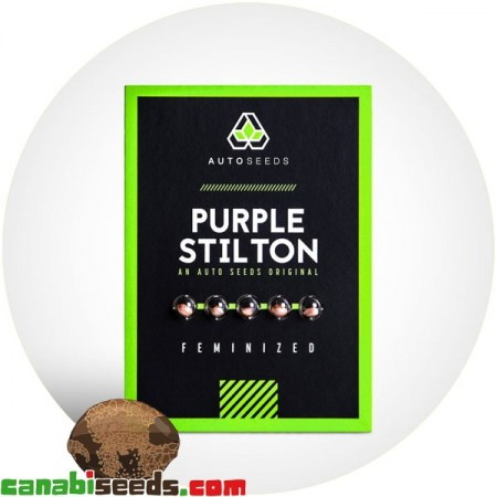 Purple Stilton