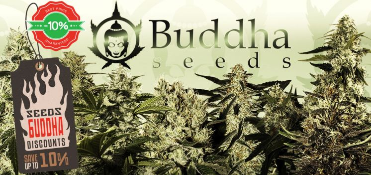 10% discount on all Buddha Seeds